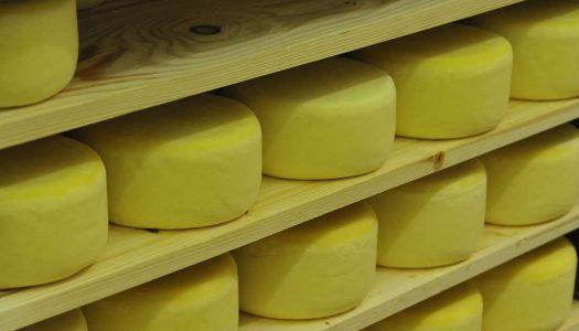 Procvat malih istarskih sirana koje nude više od sira