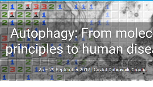 Autophagy: From molecular principles to human diseases