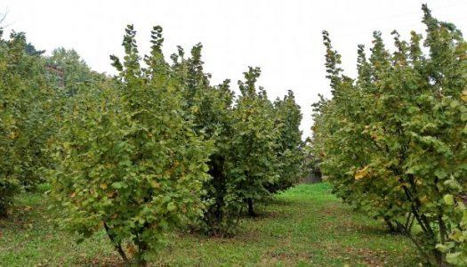 Hrvatska pamet za razvoj azerbajdžanskog agrara