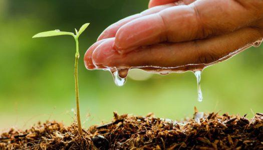 Uz ove tajne uzgoja, vaš će mirisni vrt prolistati iz sve snage