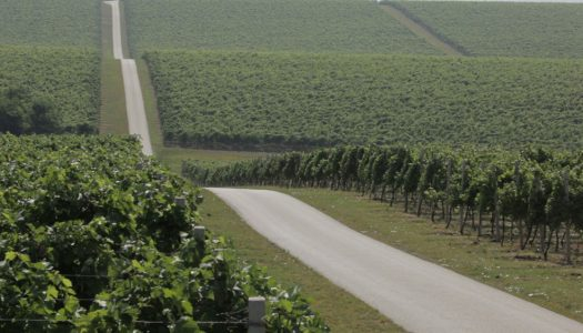 Proboj na američko tržište: hrvatske vinarije predstavile se u New Yorku