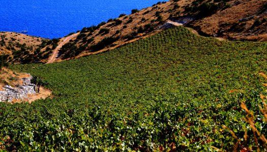 Mladi Korčulanin osvojio zlato na najvažnijem svjetskom vinskom natjecanju