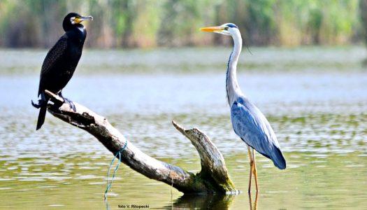 Promatranje ptica jedna je od brzorastućih grana turizma